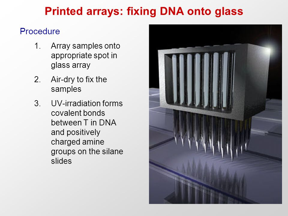Printed arrays: fixing DNA onto glass Procedure 1.Array samples onto appropriate spot in glass array 2.Air-dry to fix the samples 3.UV-irradiation forms covalent bonds between T in DNA and positively charged amine groups on the silane slides