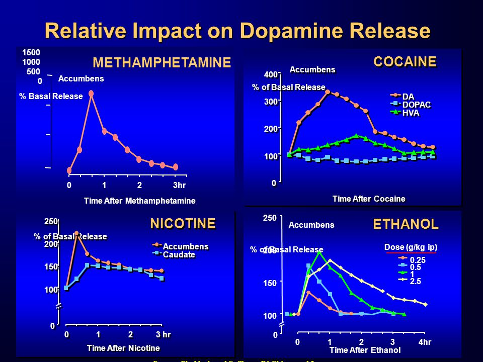 0 0 100 200 300 400 Time After Cocaine % of Basal Release DA DOPAC HVA Accumbens COCAINE 0 0 100 150 200 250 0 0 1 1 2 2 3 hr Time After Nicotine % of Basal Release Accumbens Caudate NICOTINE Source: Shoblock and Sullivan; Di Chiara and Imperato Relative Impact on Dopamine Release Time After Methamphetamine % Basal Release METHAMPHETAMINE 0123hr 1500 1000 500 0 Accumbens