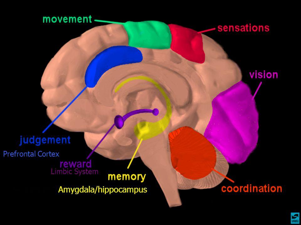 Amygdala/hippocampus Prefrontal Cortex Limbic System