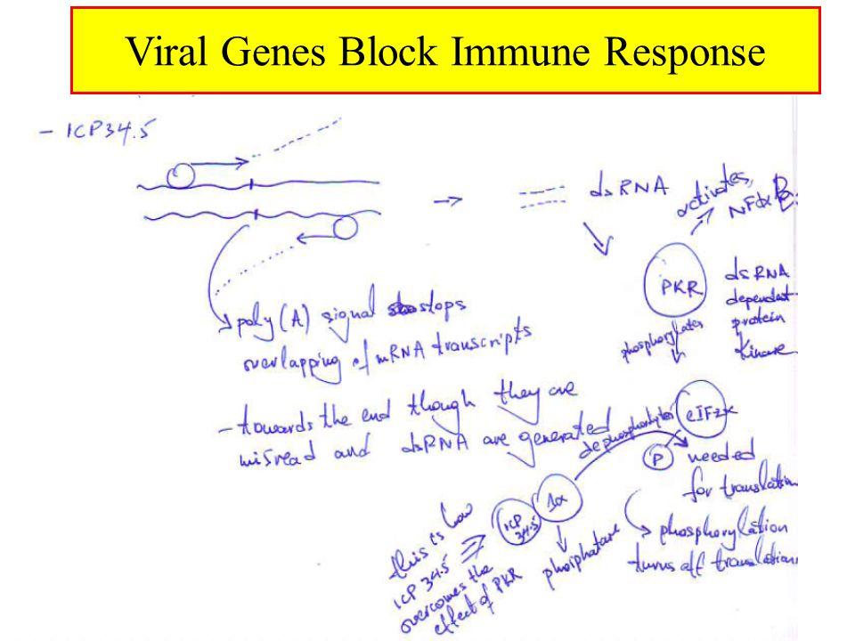 Viral Genes Block Immune Response