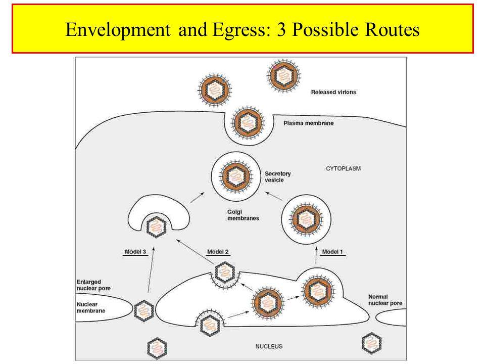 Envelopment and Egress: 3 Possible Routes