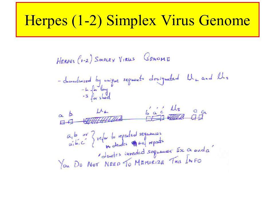 Herpes (1-2) Simplex Virus Genome