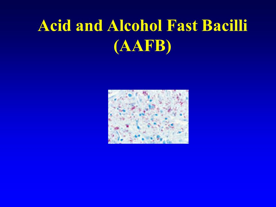 Acid and Alcohol Fast Bacilli (AAFB)