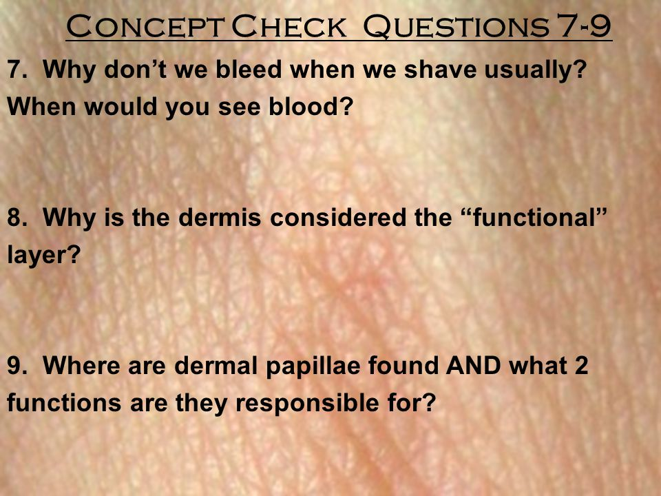 """Concept Check Questions 7-9 7. Why don't we bleed when we shave usually? When would you see blood? 8. Why is the dermis considered the """"functional"""" la"""