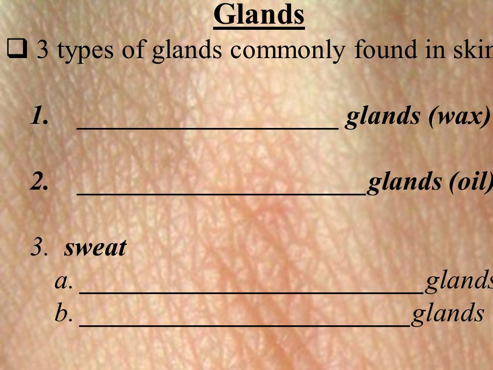  3 types of glands commonly found in skin 1.___________________ glands (wax) 2._____________________glands (oil) 3. sweat a. ________________________
