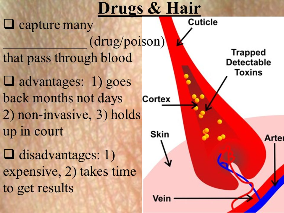 Drugs & Hair  capture many ____________ (drug/poison) that pass through blood  advantages: 1) goes back months not days 2) non-invasive, 3) holds up