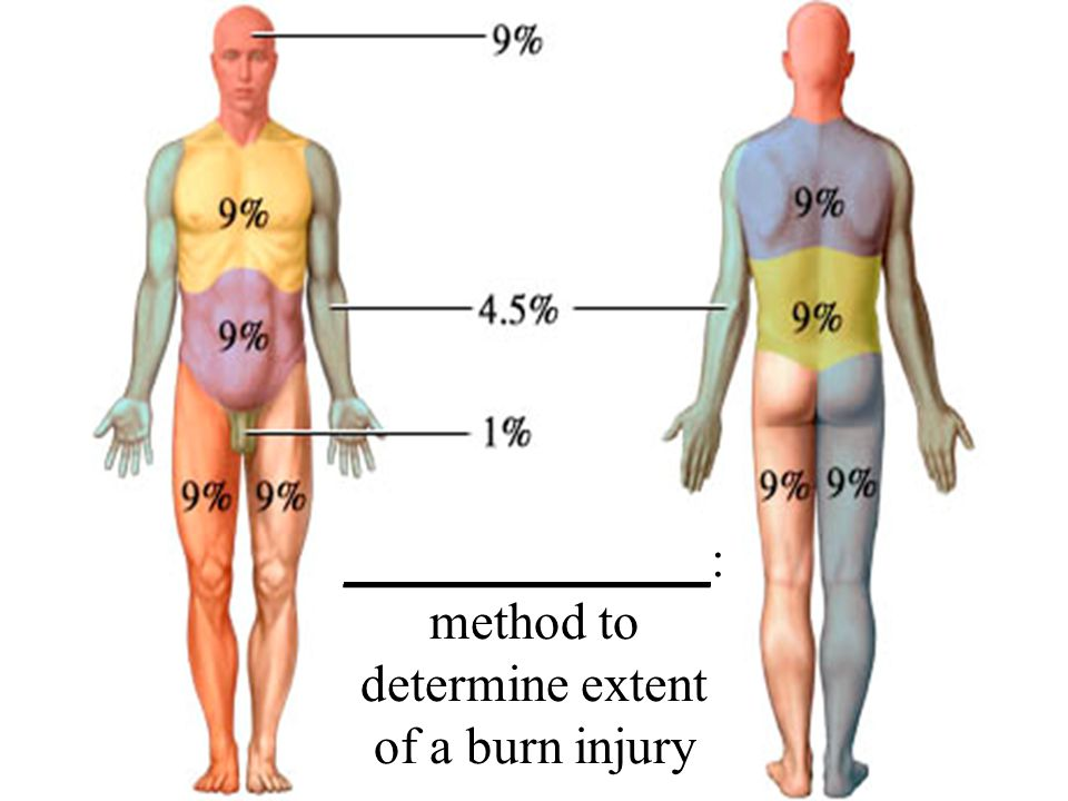 ______________: method to determine extent of a burn injury