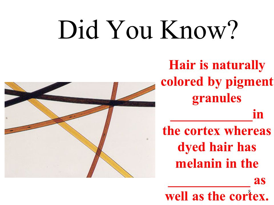 Layers of Hair  3 layers  cuticle, cortex & medulla  ___________  thin, colorless, _________ cortex & scales point toward tip; large in humans  ________  strength, ______ & texture  _________  only present in thick hair; small or non-exsitent in humans