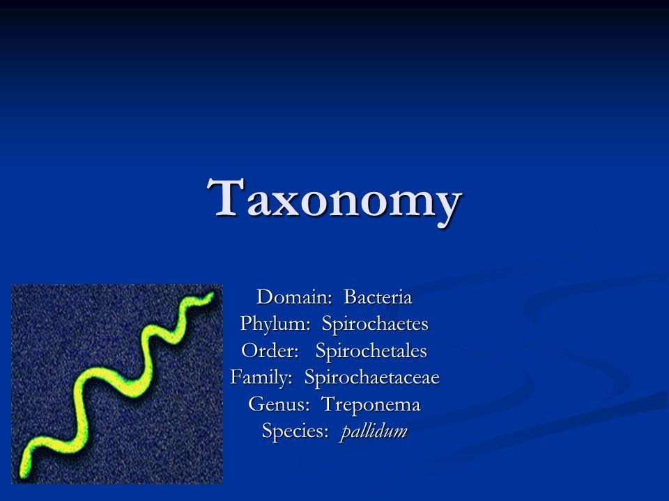 Taxonomy Domain: Bacteria Phylum: Spirochaetes Order: Spirochetales Family: Spirochaetaceae Genus: Treponema Species: pallidum