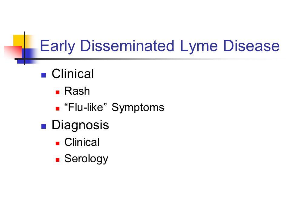 Early Disseminated Lyme Disease Clinical Rash Flu-like Symptoms Diagnosis Clinical Serology