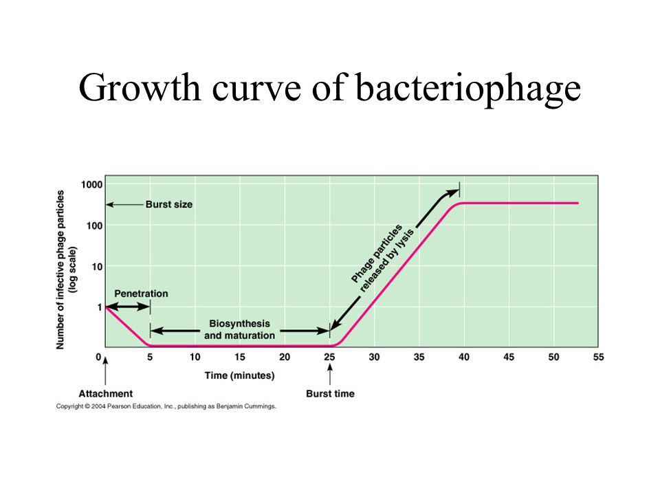 Growth curve of bacteriophage