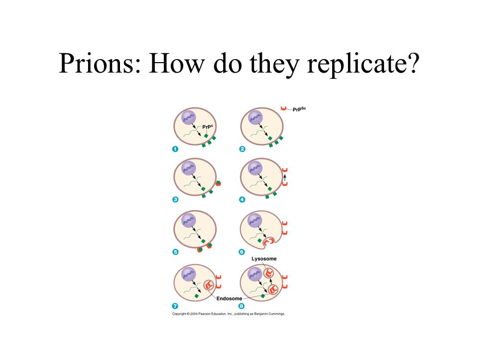 Prions: How do they replicate?