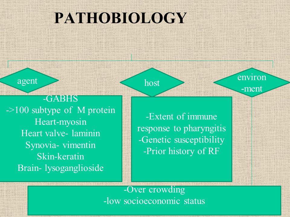 PATHOBIOLOGY agent host environ -ment -GABHS ->100 subtype of M protein Heart-myosin Heart valve- laminin Synovia- vimentin Skin-keratin Brain- lysoga