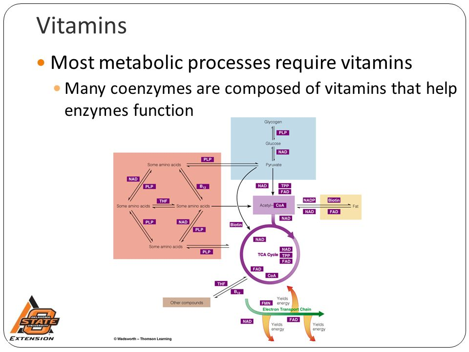 Vitamins Most metabolic processes require vitamins Many coenzymes are composed of vitamins that help enzymes function