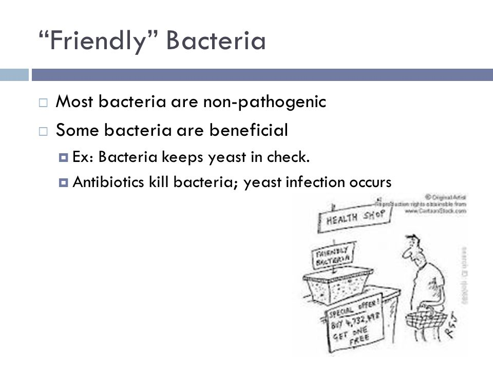 Friendly Bacteria  Most bacteria are non-pathogenic  Some bacteria are beneficial  Ex: Bacteria keeps yeast in check.
