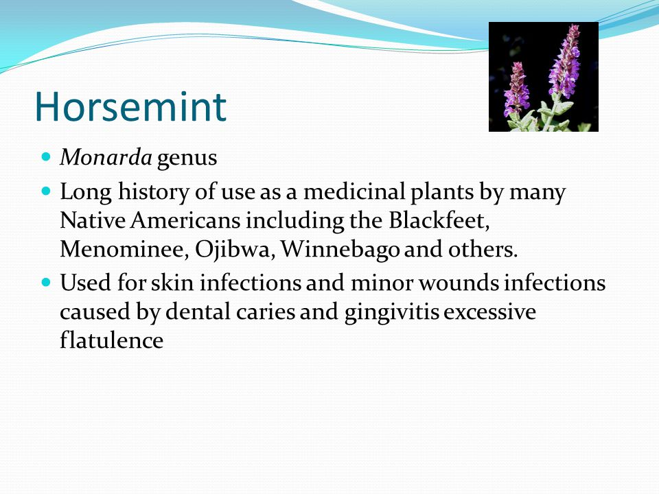 Horsemint Monarda genus Long history of use as a medicinal plants by many Native Americans including the Blackfeet, Menominee, Ojibwa, Winnebago and others.