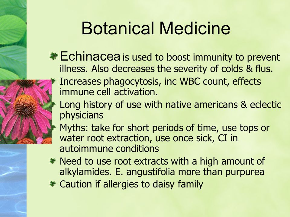 Botanical Medicine Echinacea is used to boost immunity to prevent illness.