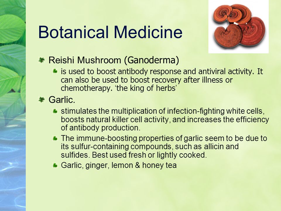 Botanical Medicine Reishi Mushroom (Ganoderma) is used to boost antibody response and antiviral activity.