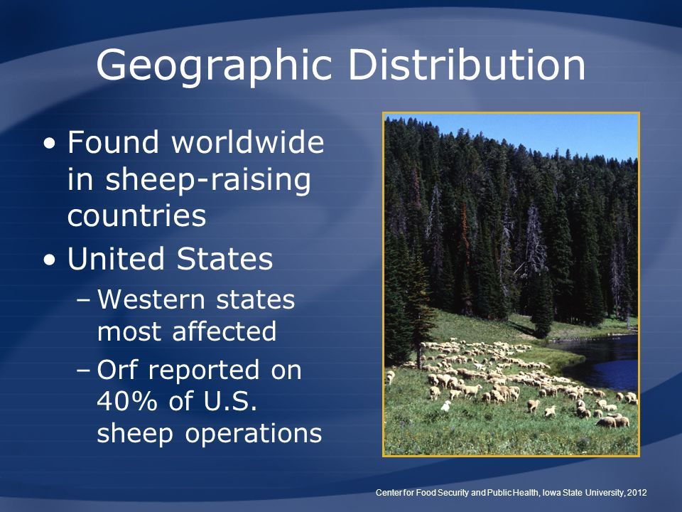 Geographic Distribution Found worldwide in sheep-raising countries United States –Western states most affected –Orf reported on 40% of U.S. sheep oper