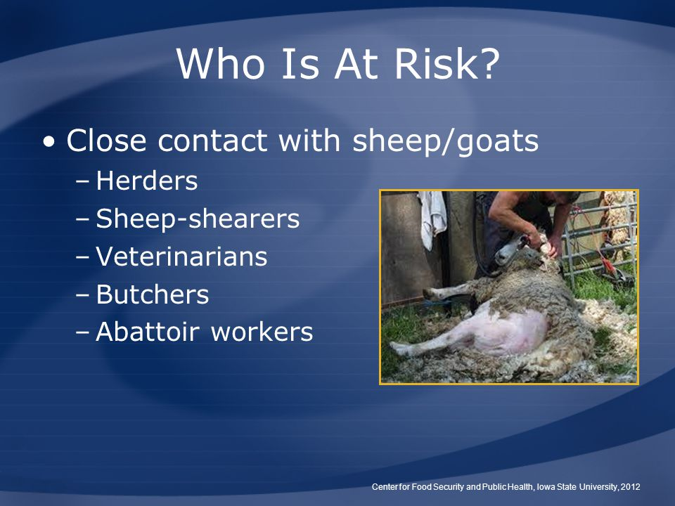 Who Is At Risk? Close contact with sheep/goats –Herders –Sheep-shearers –Veterinarians –Butchers –Abattoir workers Center for Food Security and Public