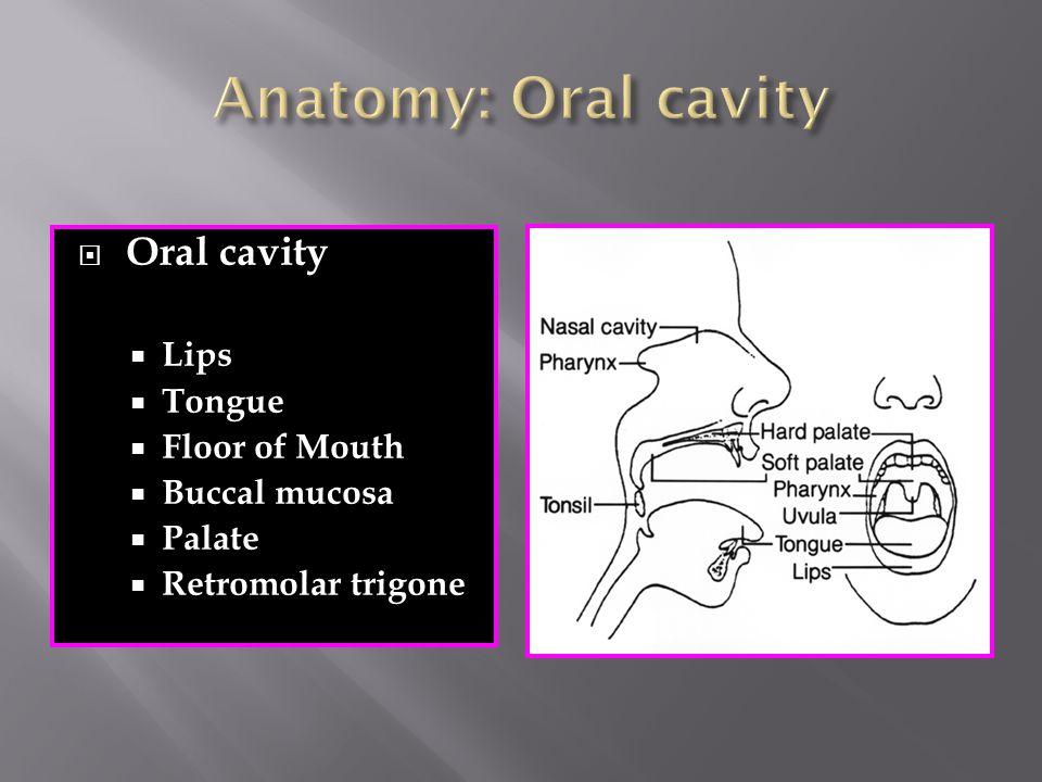  Oral cavity  Lips  Tongue  Floor of Mouth  Buccal mucosa  Palate  Retromolar trigone