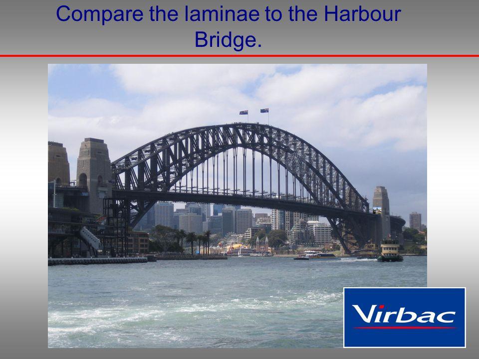 Compare the laminae to the Harbour Bridge.