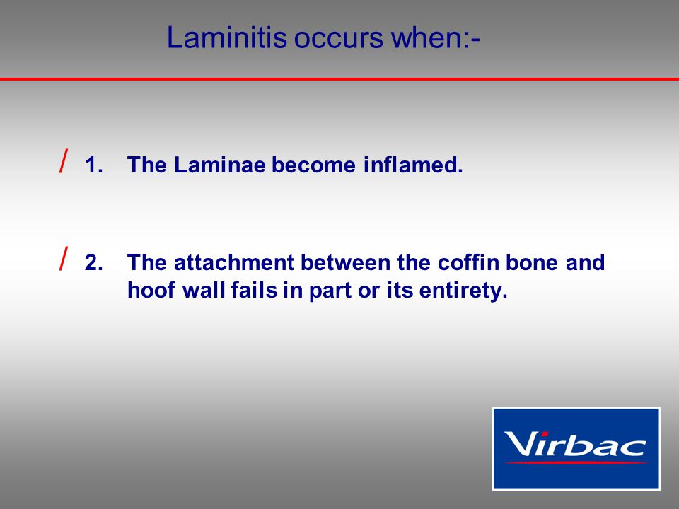 Laminitis occurs when:- / 1.The Laminae become inflamed. / 2.The attachment between the coffin bone and hoof wall fails in part or its entirety.