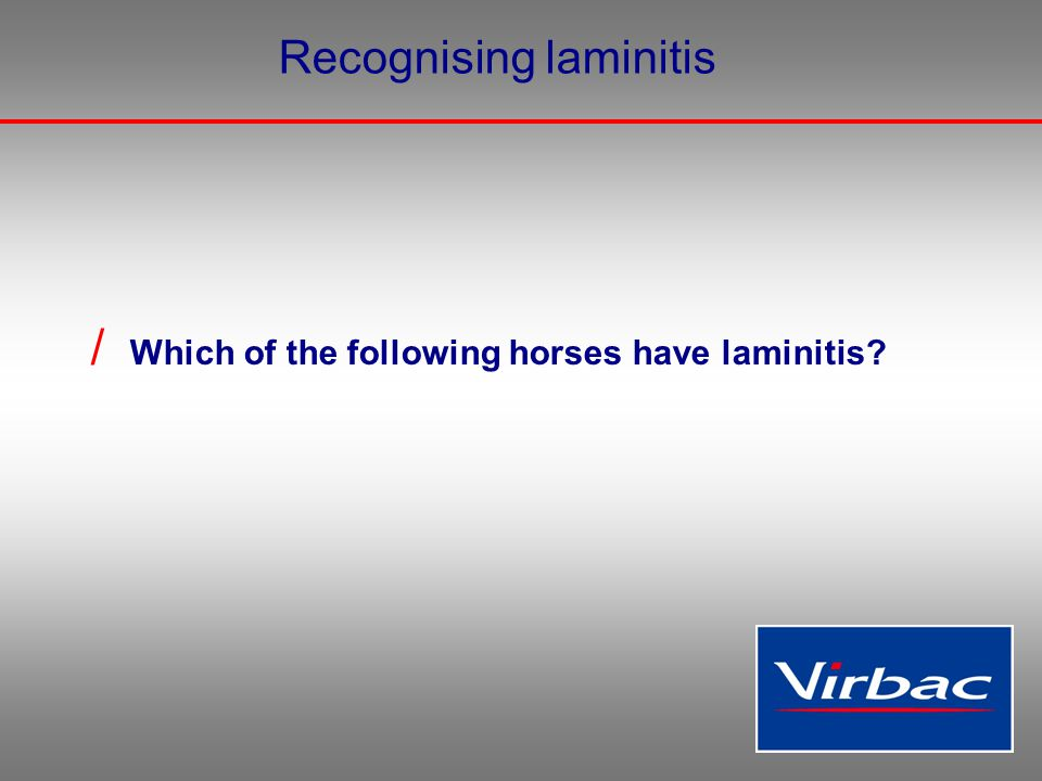 Recognising laminitis / Which of the following horses have laminitis?