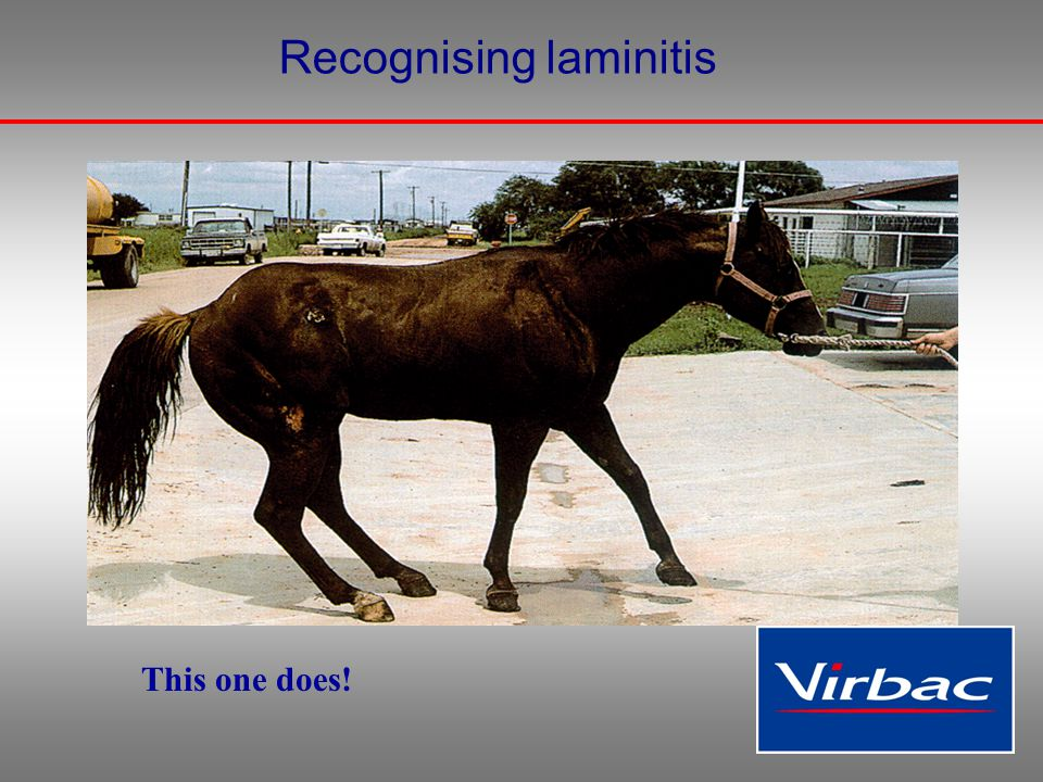 Recognising laminitis This one does!