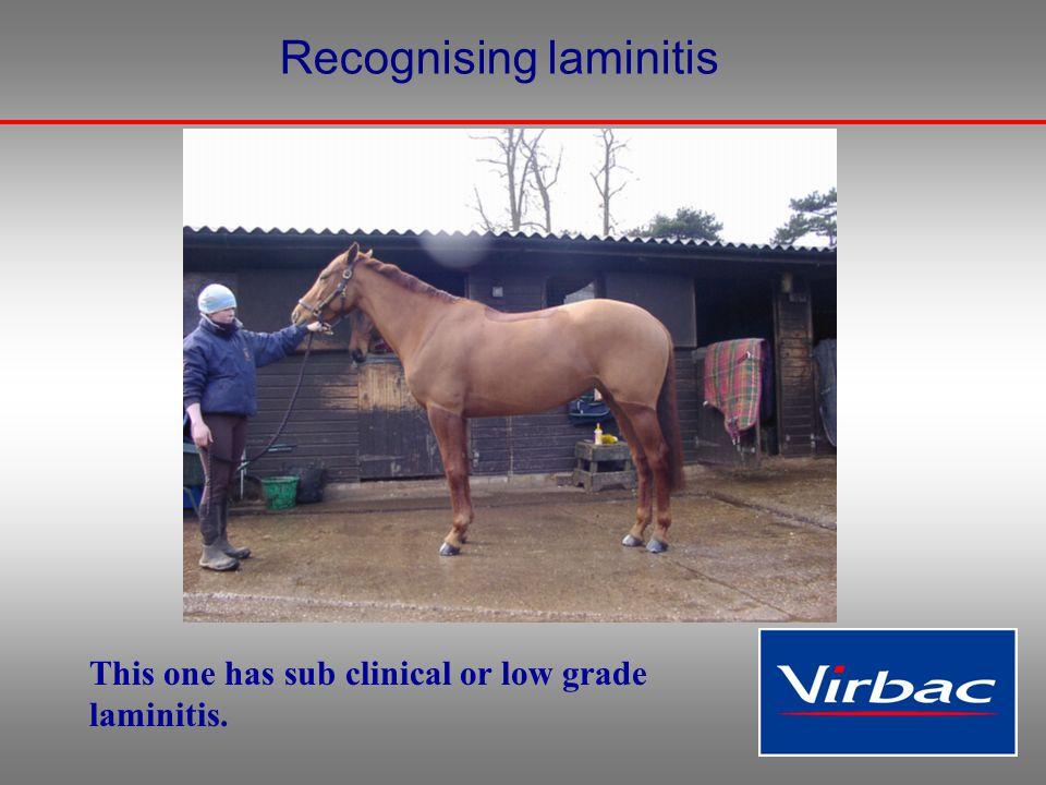 Recognising laminitis This one has sub clinical or low grade laminitis.
