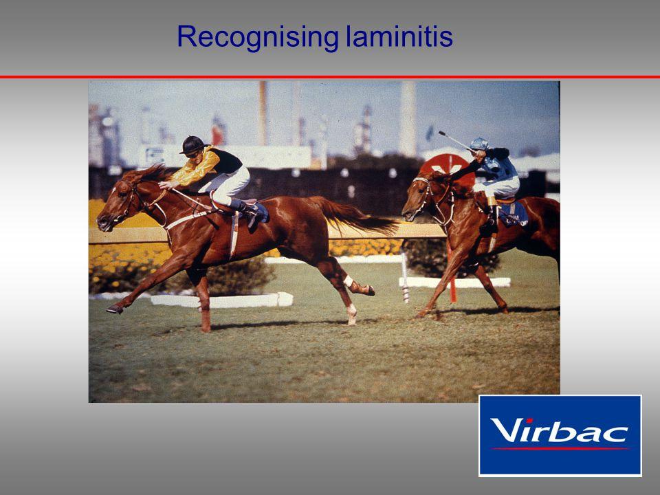 Recognising laminitis