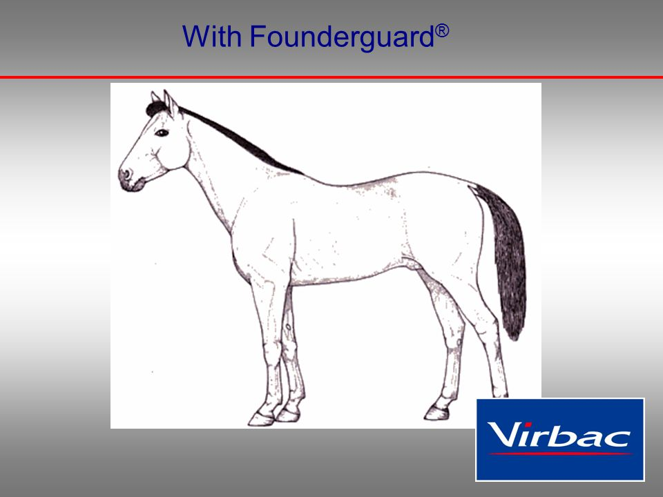 Preventing fermentation in the hindgut, prevents feed related laminitis.