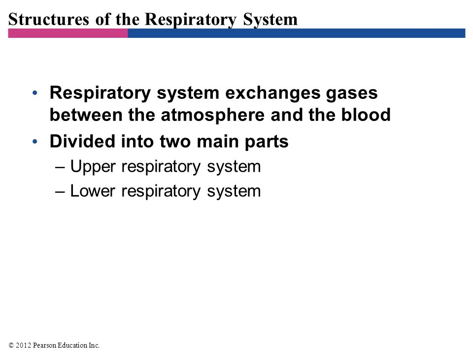 Structures of the Respiratory System Respiratory system exchanges gases between the atmosphere and the blood Divided into two main parts –Upper respir