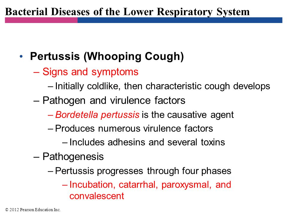 Bacterial Diseases of the Lower Respiratory System Pertussis (Whooping Cough) –Signs and symptoms –Initially coldlike, then characteristic cough devel