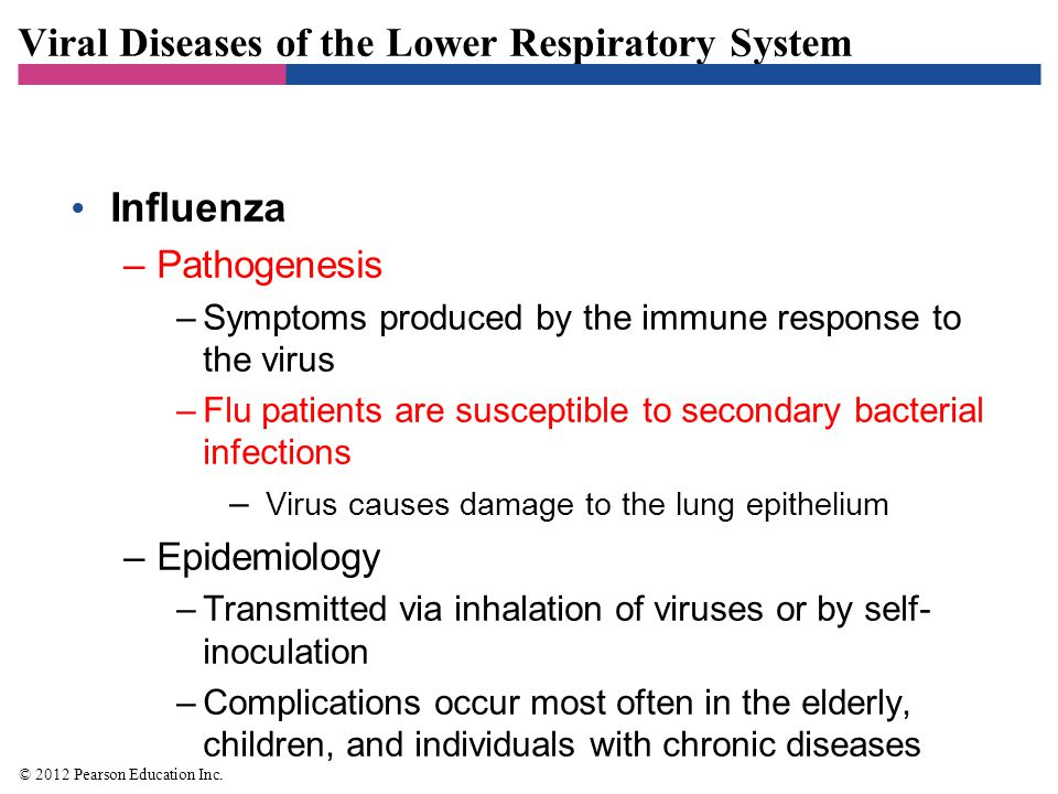 Viral Diseases of the Lower Respiratory System Influenza –Pathogenesis –Symptoms produced by the immune response to the virus –Flu patients are suscep