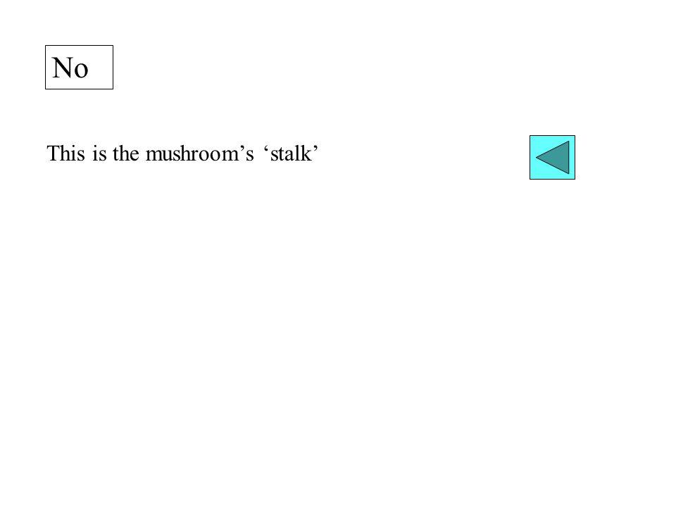 No This is the mushroom's 'stalk'
