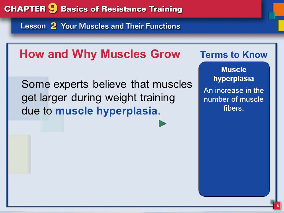 16 How and Why Muscles Grow Some experts believe that muscles get larger during weight training due to muscle hyperplasia. Muscle hyperplasia An incre