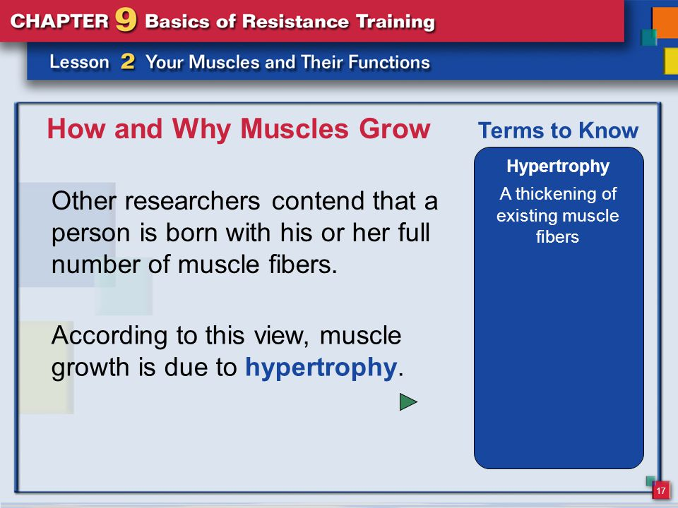 17 How and Why Muscles Grow Other researchers contend that a person is born with his or her full number of muscle fibers. Hypertrophy A thickening of