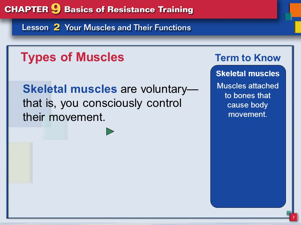 7 Types of Muscles Skeletal muscles are voluntary— that is, you consciously control their movement. Skeletal muscles Muscles attached to bones that ca