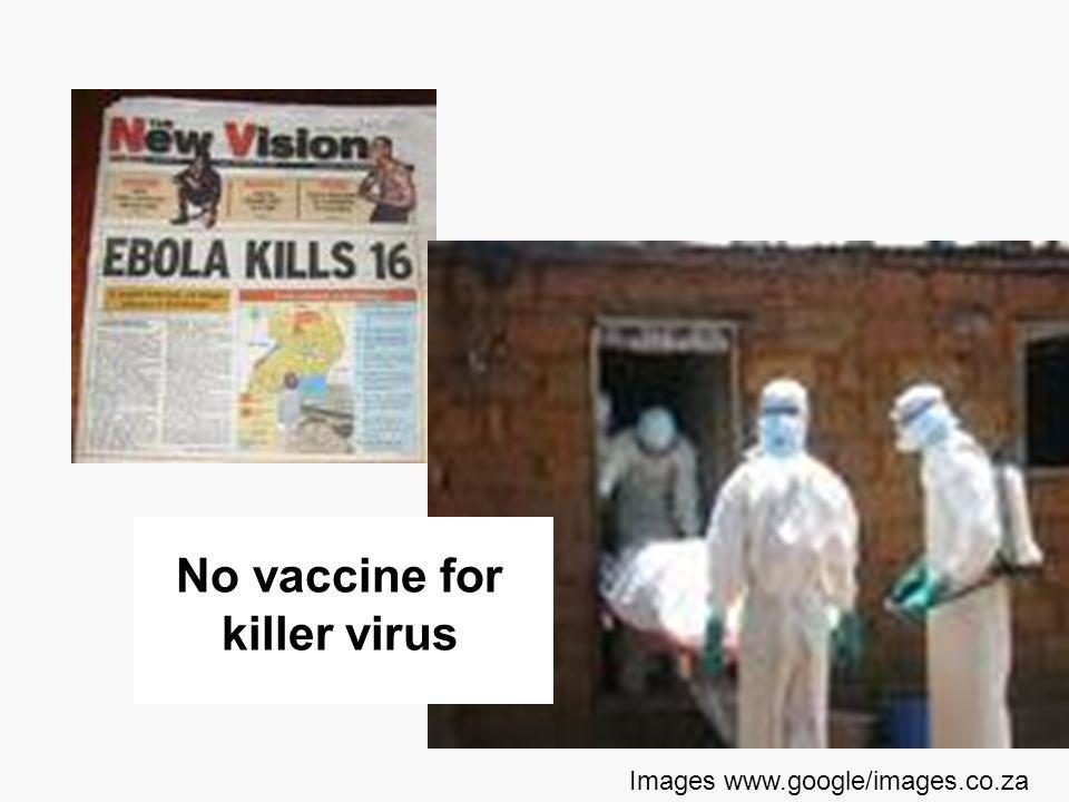 No vaccine for killer virus Images www.google/images.co.za