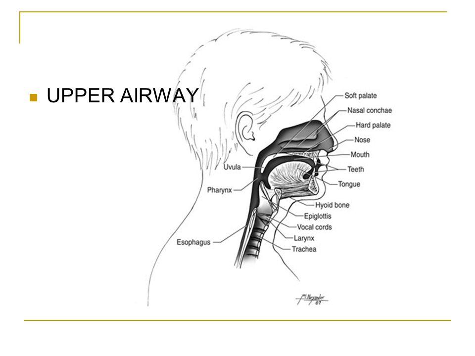 UPPER AIRWAY