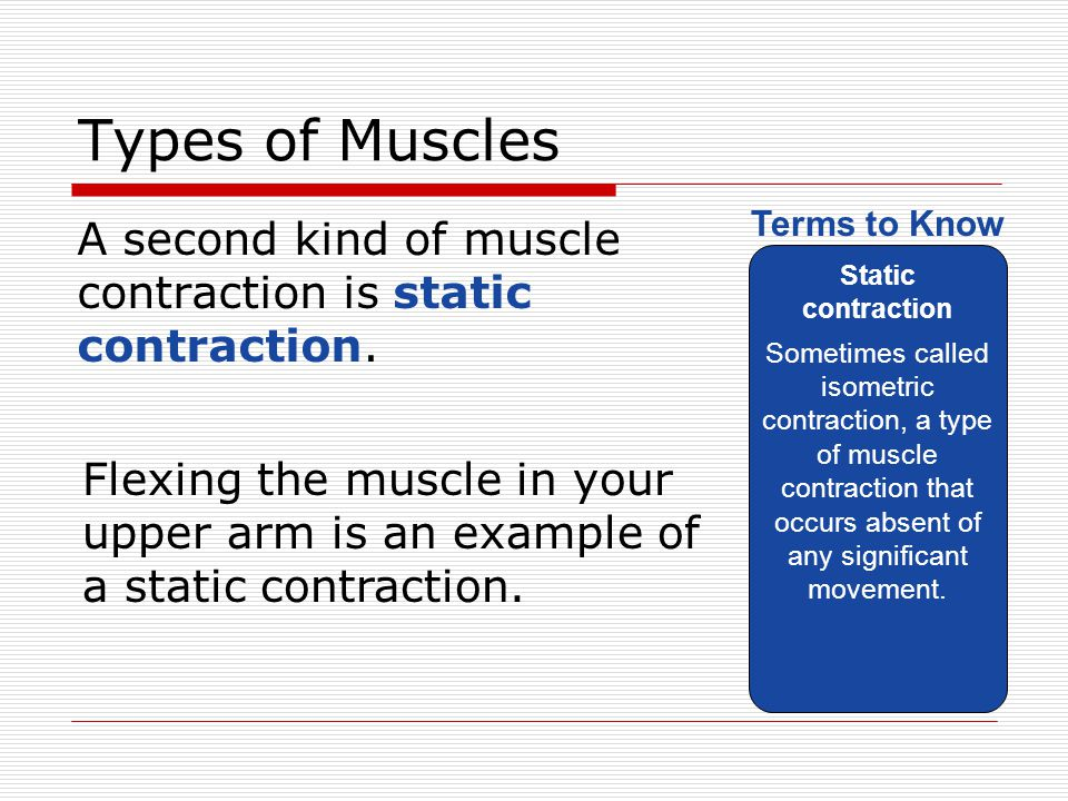 Types of Muscles A second kind of muscle contraction is static contraction. Static contraction Sometimes called isometric contraction, a type of muscl