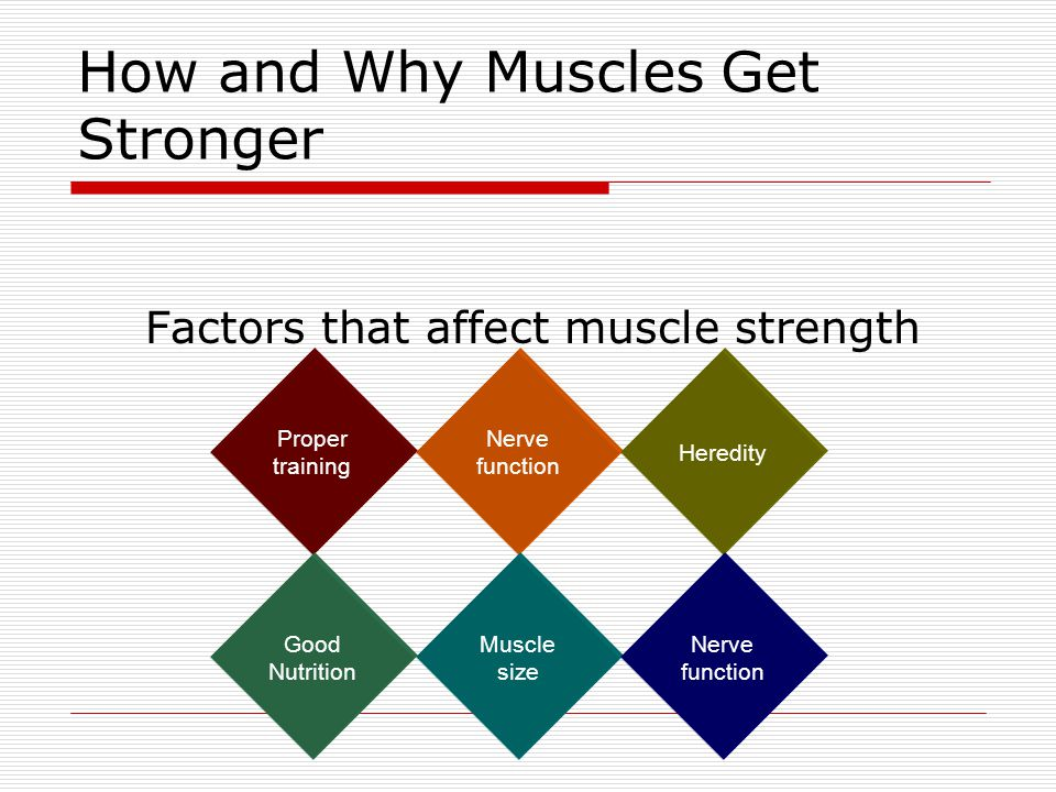 How and Why Muscles Get Stronger Factors that affect muscle strength Proper training Nerve function Heredity Muscle size Nerve function Good Nutrition