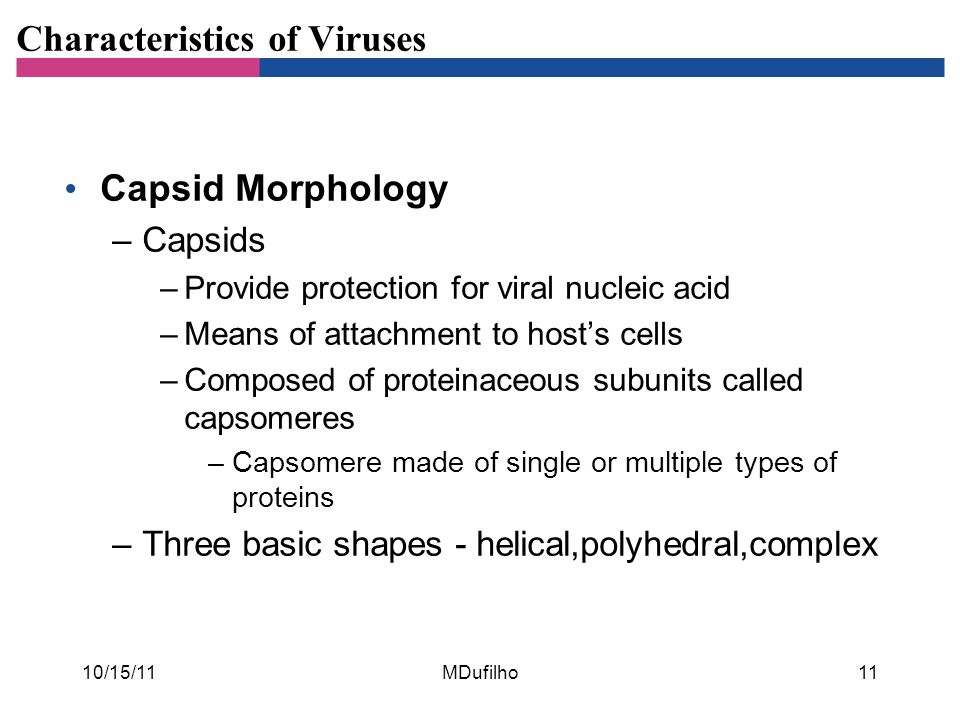 Characteristics of Viruses Capsid Morphology –Capsids –Provide protection for viral nucleic acid –Means of attachment to host's cells –Composed of pro
