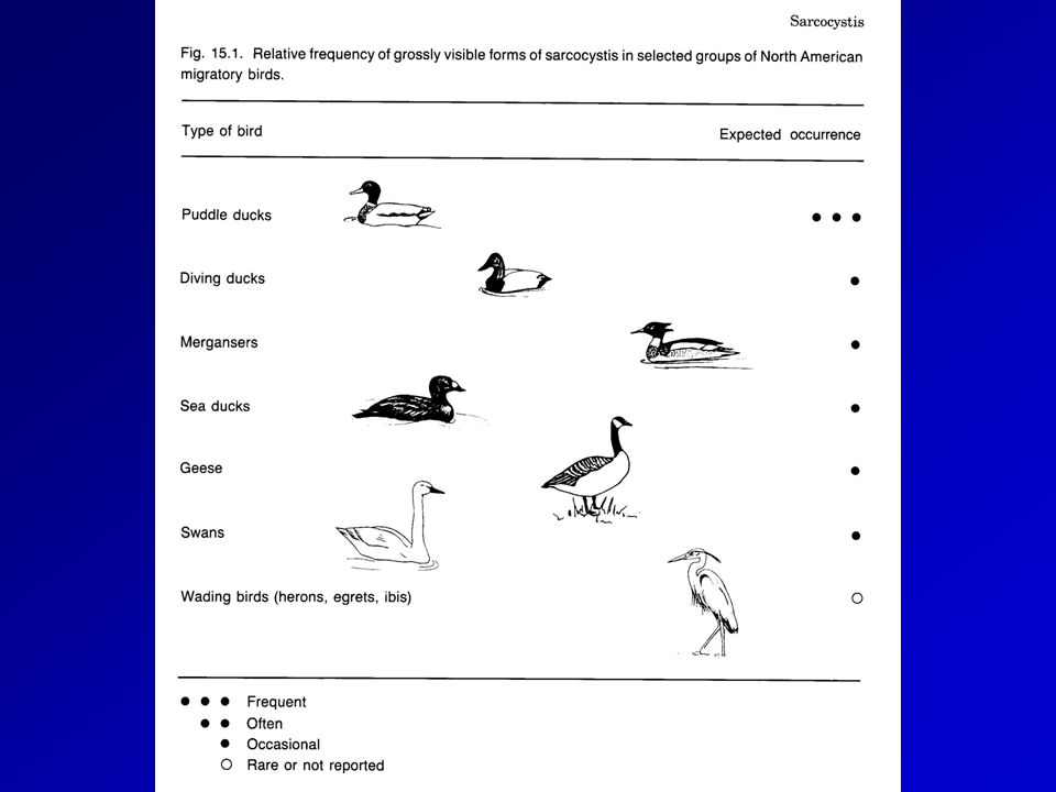 CONFINE AND TREAT SICK (E.G., BOTULISM) DISPERSE HEALTHY MASS VACCINATION STERILIZE WATER PREVENT SCAVENGING PREVENT UNNATURAL WATERFOWL CONCENTRATIONS