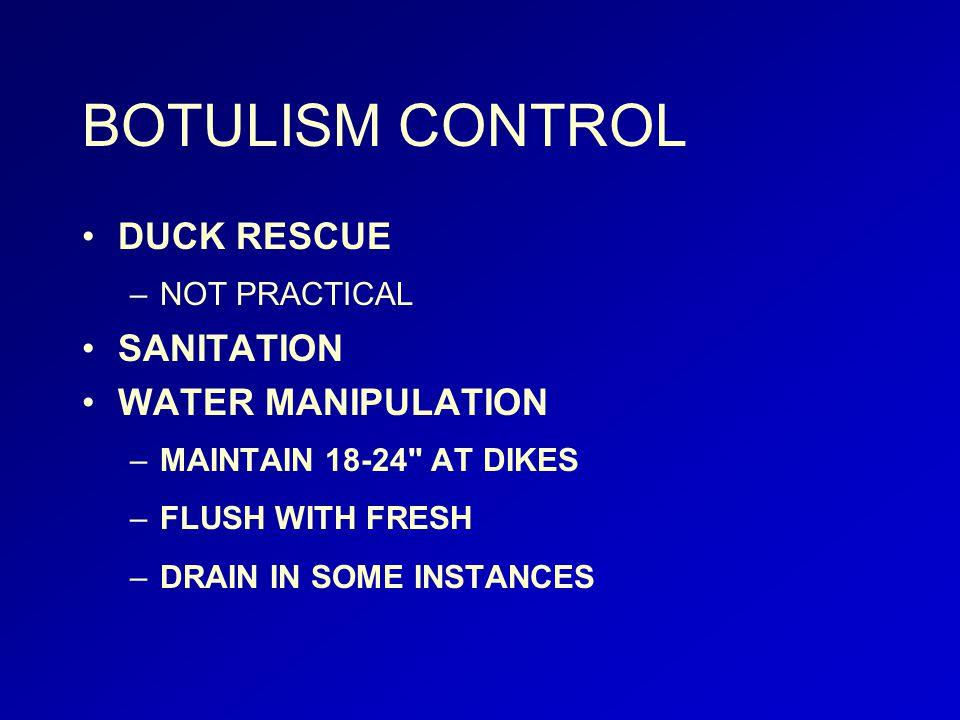 BOTULISM CONTROL DUCK RESCUE –NOT PRACTICAL SANITATION WATER MANIPULATION –MAINTAIN 18-24