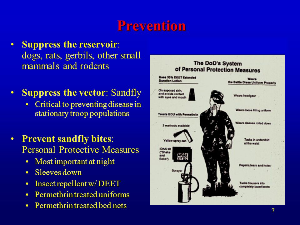7 Prevention Suppress the reservoir: dogs, rats, gerbils, other small mammals and rodents Suppress the vector: Sandfly Critical to preventing disease
