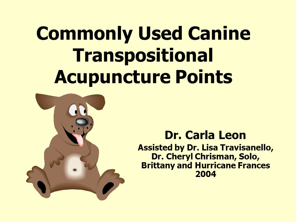 Commonly Used Canine Transpositional Acupuncture Points Dr.