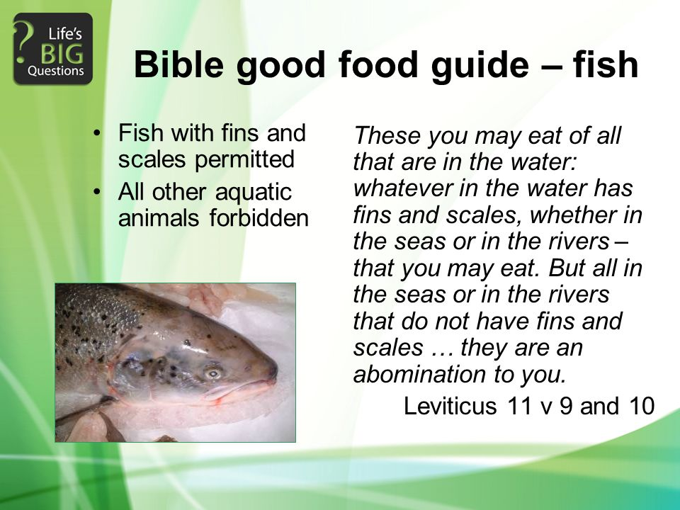 Bible good food guide – fish Fish with fins and scales permitted All other aquatic animals forbidden These you may eat of all that are in the water: w