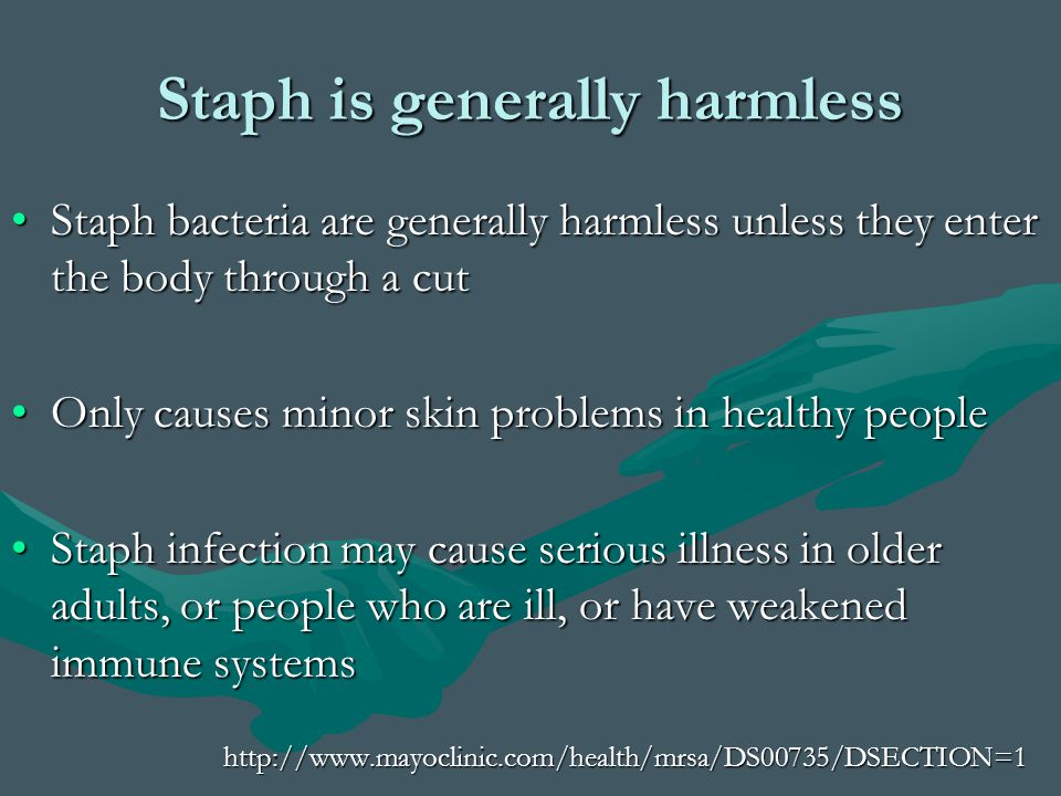 Staph is generally harmless Staph bacteria are generally harmless unless they enter the body through a cutStaph bacteria are generally harmless unless